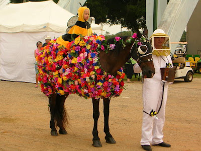 Horse Fancy Dress Ideas: Harry Trotter |Horse Fancy Dress Costumes