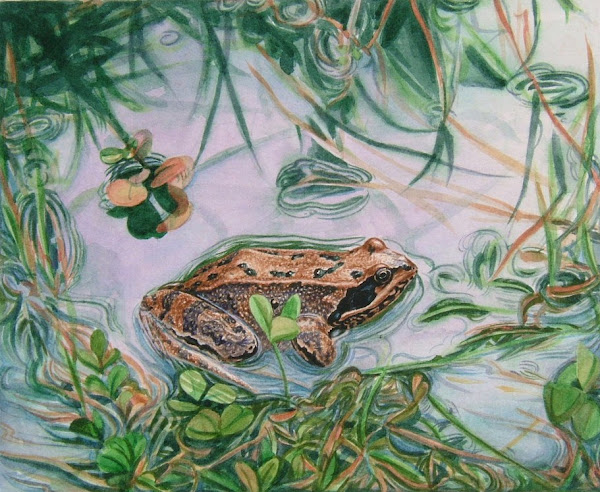 Common Frog   watercolour early 80s