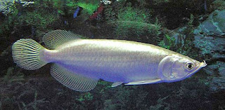 Beautiful Fishes In All Around The World Most Expensive Aquarium