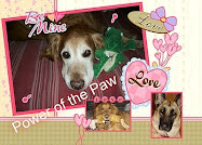 Power of the Paws for Luke