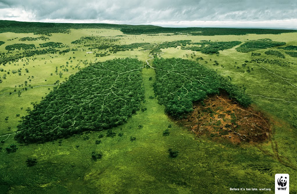 WWF: World Wide Fund (for Nature)