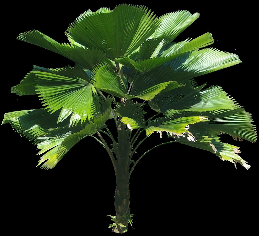 Tropical Plants Palm