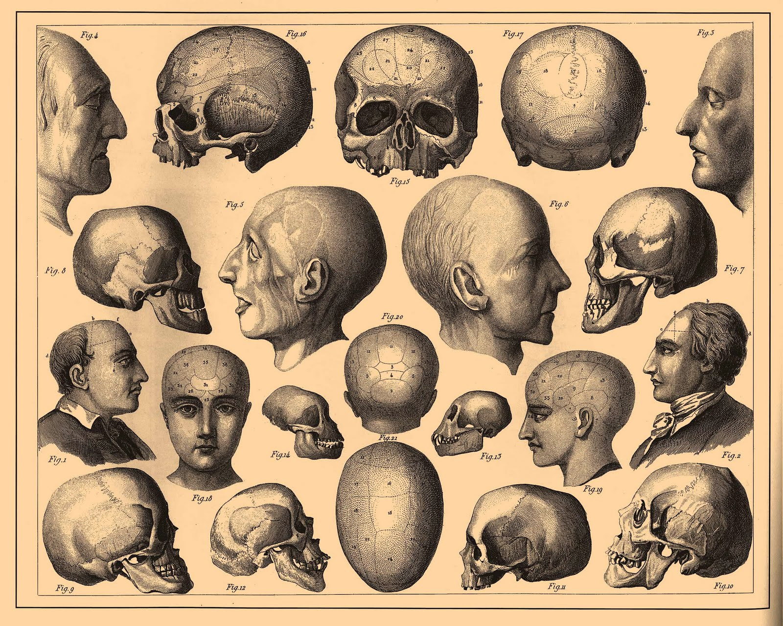 Vintage Ephemera: Skull and bone Illustrations (1890—1907)