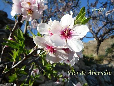 Flor de almendro al rinc n de cocinar - Flores para cocinar ...