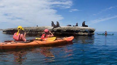 Aventura y naturaleza en la Excursión de kayak por la lobería de Punta Pirámides