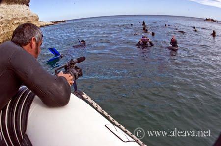 Excursión de Buceo con Lobos Marinos, un lujo de Península Valdés
