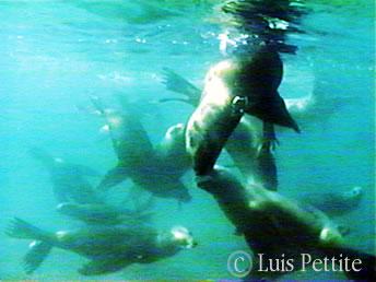 Fauna Marina en Península Valdés