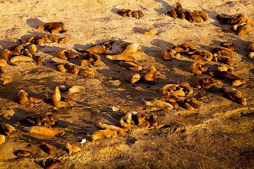 Verano entre lobos marinos en la Patagonia
