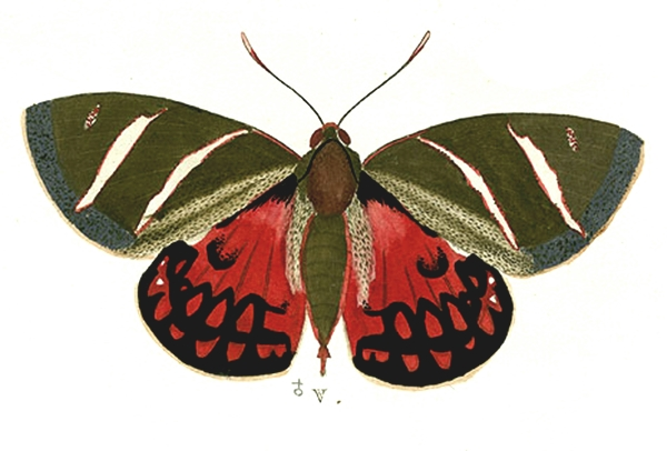 The Vintage Moth..: Free Antique Moth Images ~ Free Clipart