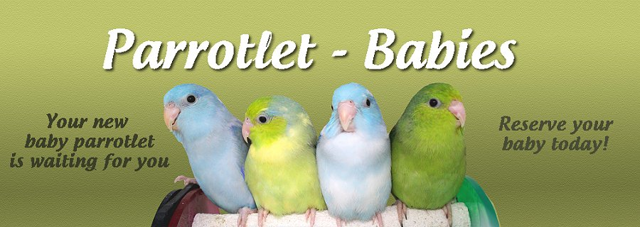 Parrotlet Food Recipes