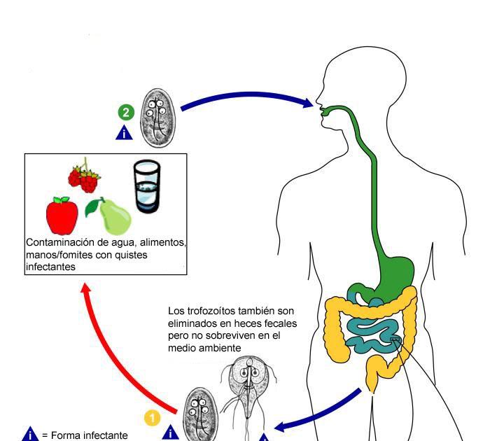 a giardiasis extraintestinalis formája