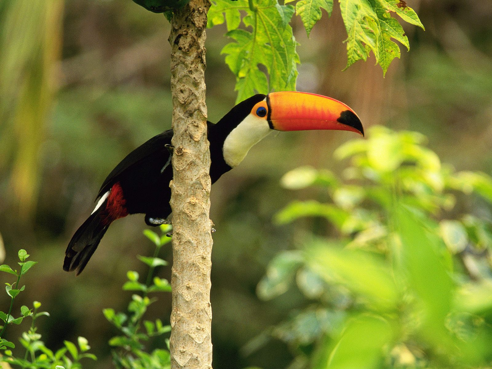 Nice wallpapers islamic wallpapers aqwal e zareen - Hd pics of nature with birds ...