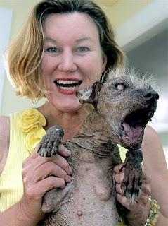 el perro más feo del mundo (el perro sam)