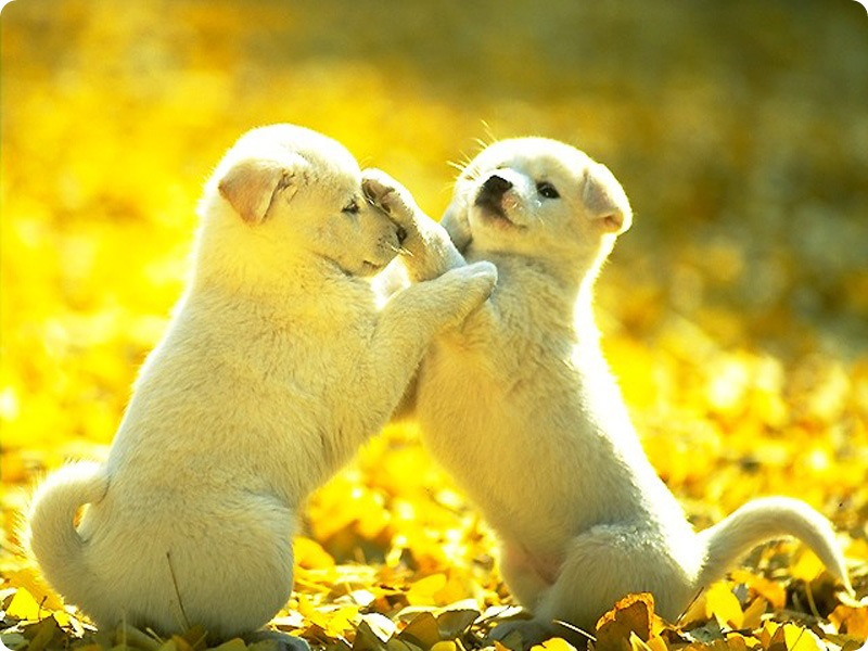 cute dogs pet puppies puppy animales dog animals animal pets puppys cutest friends fighting fight adorable los friendship play graphics
