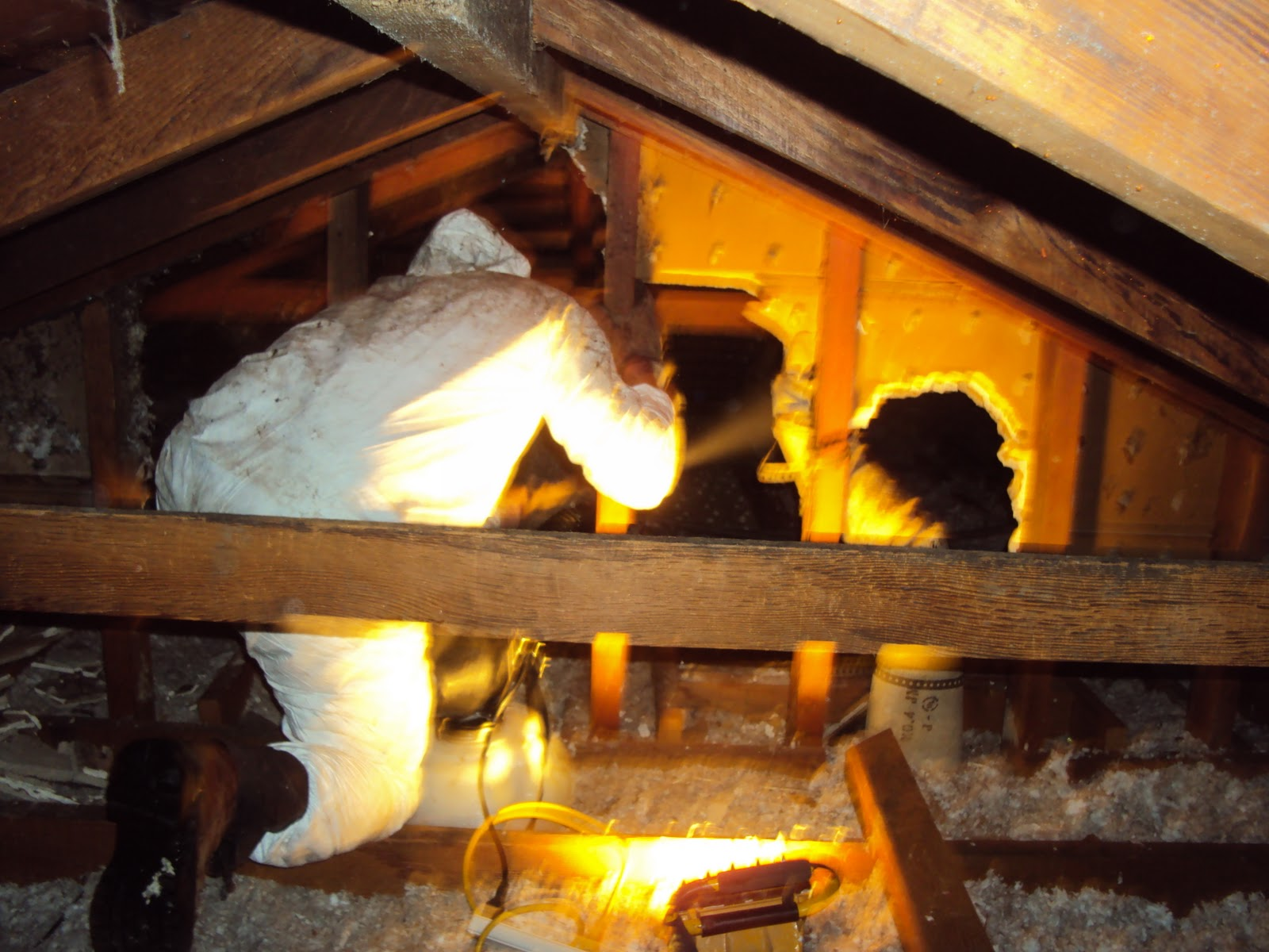 All City Animal Trapping Clean Ups Of Attics And Crawl