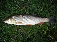 pescuit la clean