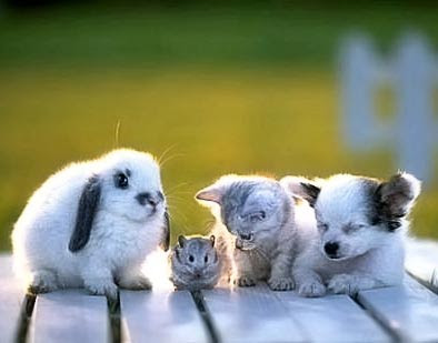 Rabbit, Hamster, Kitten and Puppy dog in the sunset - four cuties
