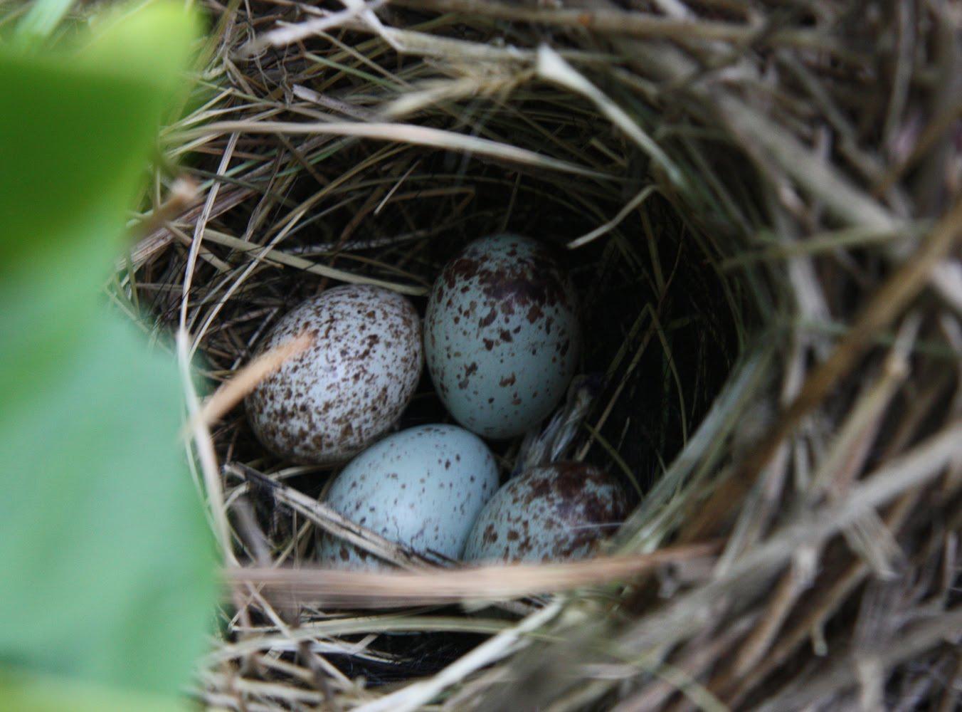 how to fix bird nest baitcaster