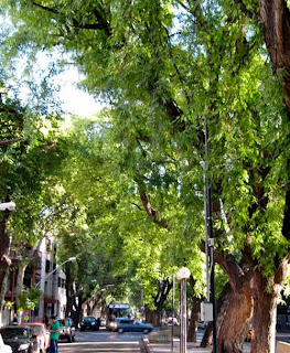 Beautiful Tree Lined Streets Mendoza Argentina
