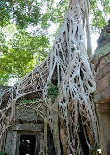 Ta Prohm Temple Tomb Rader Cambodia