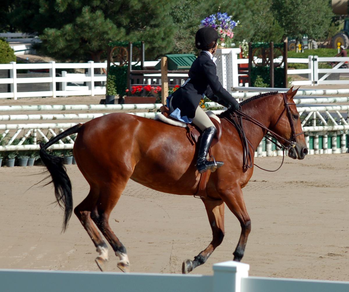Braymere Custom Saddlery: Hunter Derby postscript