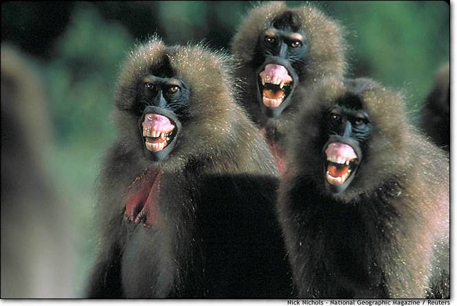 Move It Yah Big Baboon Or Scenes From The Class