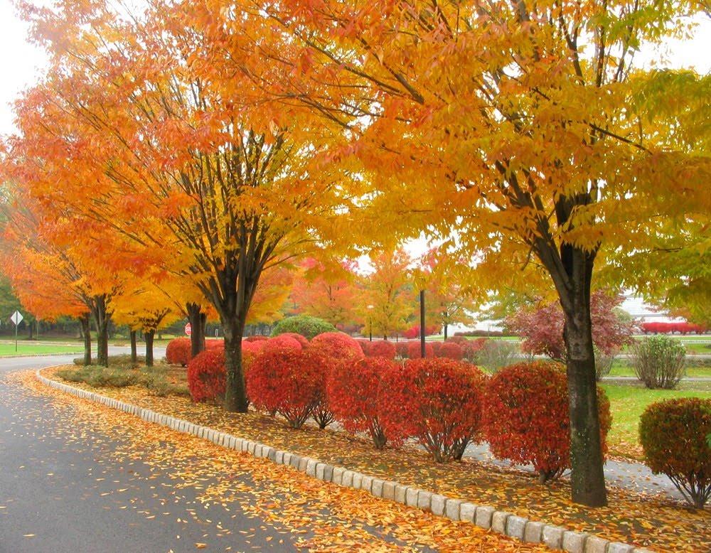 early autumn langston hughes