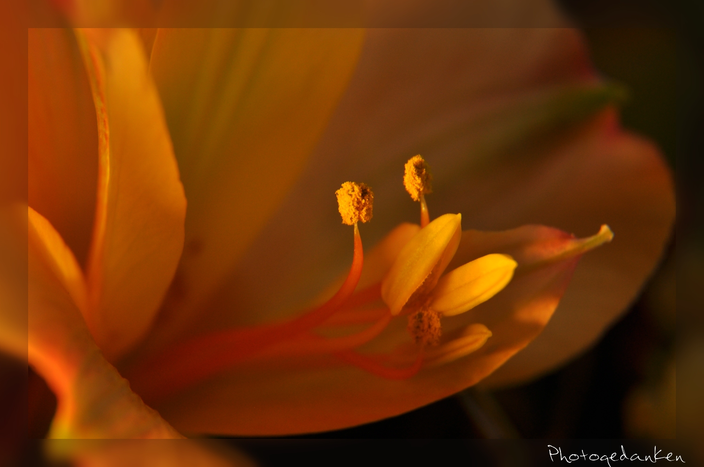 lila farbiger pilz