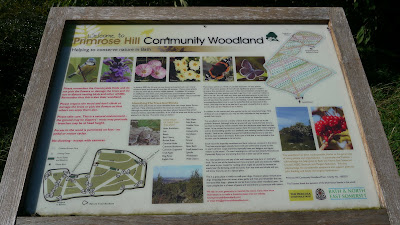Primrose Hill Community Woodland
