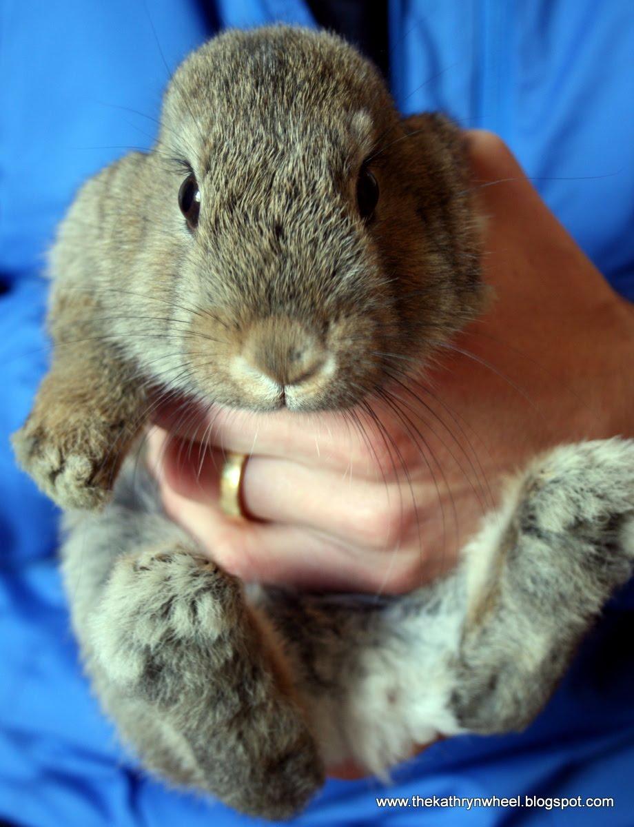 meet my new bunny bites