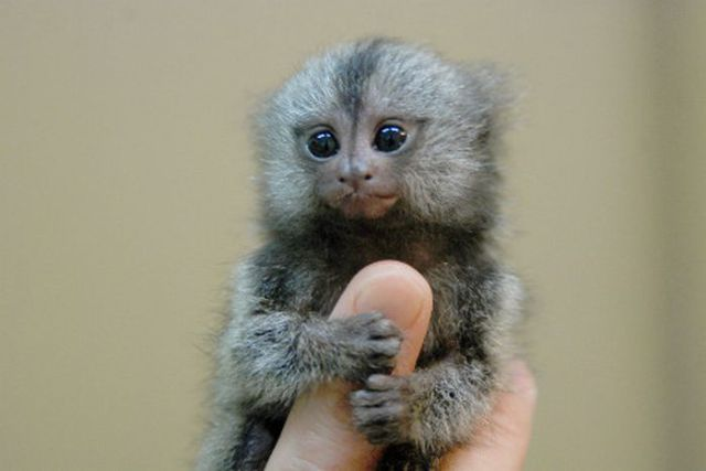 Whats Smallest Mammal