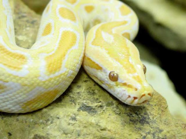yello python