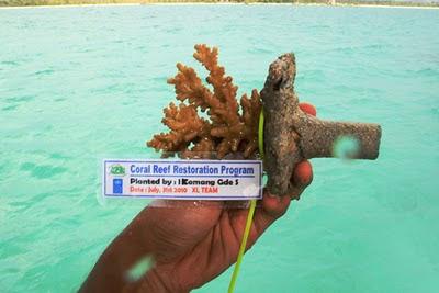 Berinvestasi terumbu karang