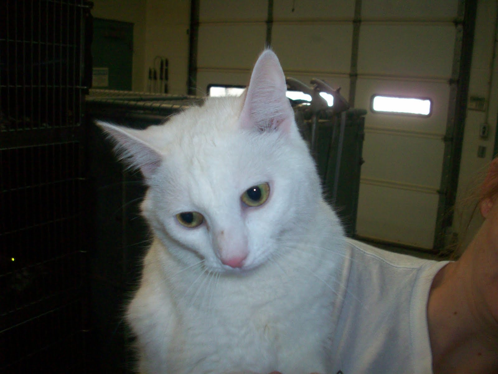 Deaf Animals: Tuscaloosa, AL: Cat Needs to Get Out