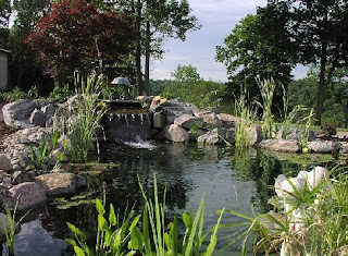 Water features kelowna ponds marty pope for Koi pond kelowna