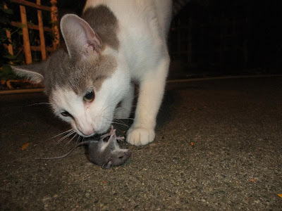 cat catch mouse, baby mouse, bring inside,