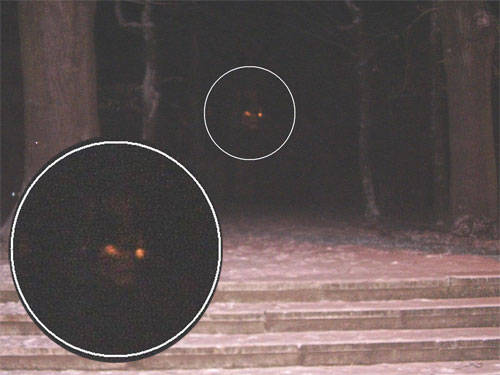 Ghost With Glowing Eyes in Forest | Ghost Bhoot
