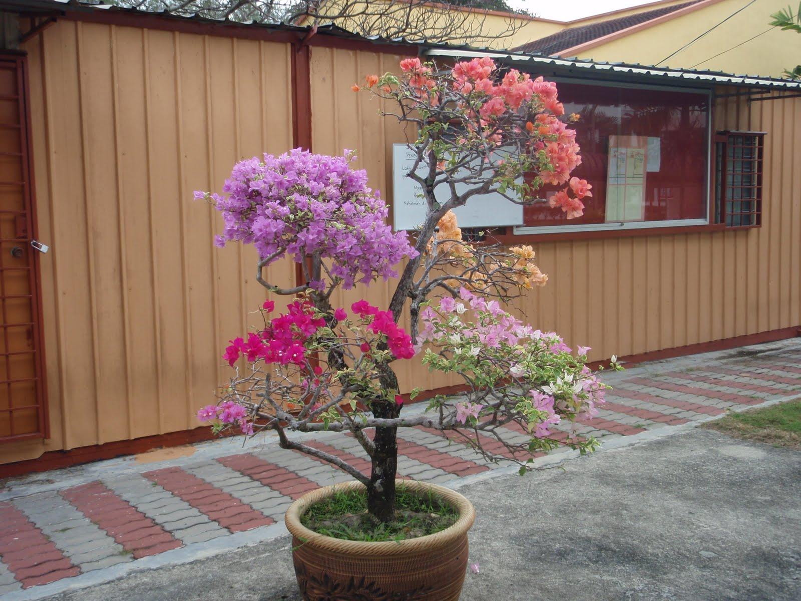 Terbaru 39 Gambar Bunga Kertas Warna Warni