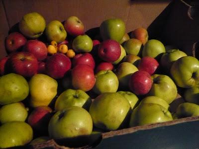 https://i2.wp.com/3.bp.blogspot.com/_XZRE6tDYH-8/Su9aldQI8-I/AAAAAAAAAEA/dUvrc6XcBqw/s400/sloe+berry+pickin+189.jpg