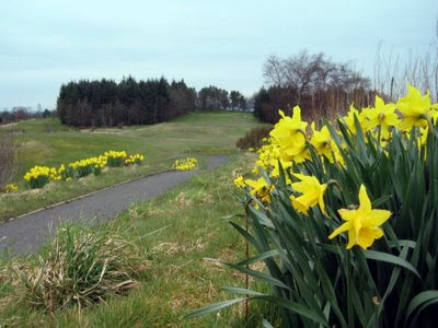Click on the daffodils to see who is a winner !!