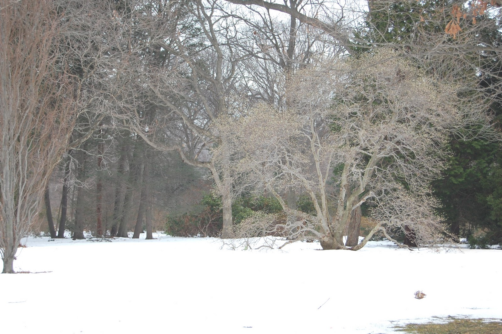 The Official Botanic Garden Of Rutgers: A Photographer's Garden: New Years In The Gardens