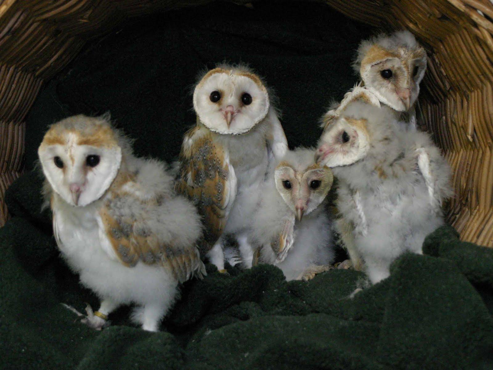 World Bird Sanctuary: The Rookie Files: Riley