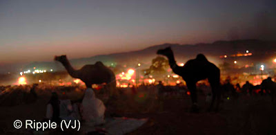 Posted by Ripple (VJ) :  Pushkar Camel Fair 2008 : Night View of Fair ground @ Pushkar Camel Fair 2008The small and beautiful town of Pushkar is set in a valley just about 14 km off Ajmer in the north Indian state of Rajasthan. Surrounded by hills on three sides and sand dunes on the other, Pushkar forms a fascinating location and a befitting backdrop for the annual religious and cattle fair which is globally famous and attracts thousands of visitors from all parts of the world.
