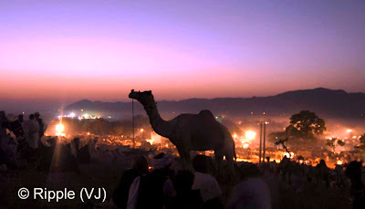 Posted by Ripple (VJ) :  Pushkar Camel Fair 2008 : Night View @ Pushkar Camel Fair 2008The small and beautiful town of Pushkar is set in a valley just about 14 km off Ajmer in the north Indian state of Rajasthan. Surrounded by hills on three sides and sand dunes on the other, Pushkar forms a fascinating location and a befitting backdrop for the annual religious and cattle fair which is globally famous and attracts thousands of visitors from all parts of the world.