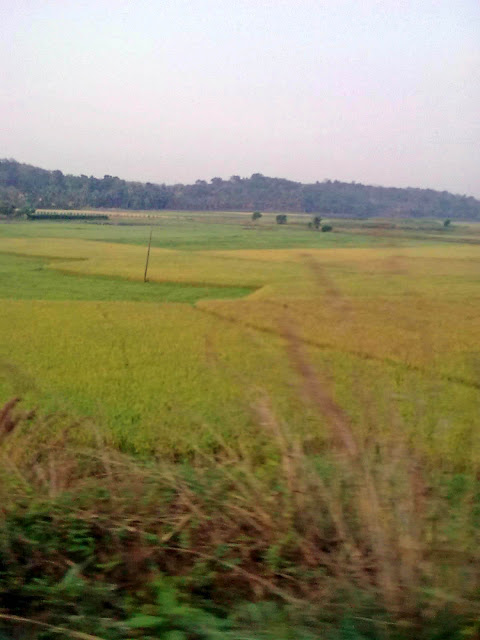 Train Journey in Kerala with Sujatha Parvathy: Posted by Sujatha Parvathy on www.travellingcamera.com : The most striking aspect of Kerala is the striking variety of holiday options available. From driving through in lush green tea gardens in hillstations to a quiet walk on the beach, you can do it all. Further you can also spend a romantic night marooned inside a Houseboat right in the middle of backwaters and go for some exciting wildlife safaris.Palm and Coconut trees line the horizon around backwaters and rivers. Monsoon clouds loom in the sky.Kerala is a popular tourist destination famous for its backwaters, Ayurvedic treatments and tropical greenery... The state has a literacy rate of 94.6 percent which is highest in India.Green fields can be seen everywhere. I noticed a lot of paddy fields there.Kerala's culture is derived from both a Tamil-heritage region known as Tamilakam and southern coastal Karnataka. Later on Kerala's culture was elaborated upon through centuries of contact with neighboring and overseas cultures...Local performing arts include koodiyattom , kathakali—from and its offshoot Kerala naSmall Streams flow everywhere. A few have been converted to irrigation canals. This one is especially scenic with water lillies dotting the surface...tanam, Kaliyattam , koothu , mohiniaattam, Theyyam, thullal NS padayani.Kathakali and Mohiniattam are widely recognized Indian Classical Dance traditions from Kerala.Natural unspoilt beauty is abundant. You just need to look around...
