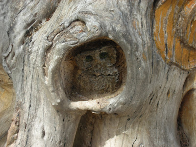 Carved owl in a tree