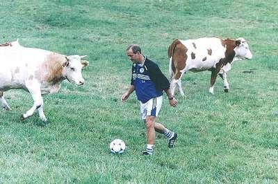 Resultado de imagem para vaca