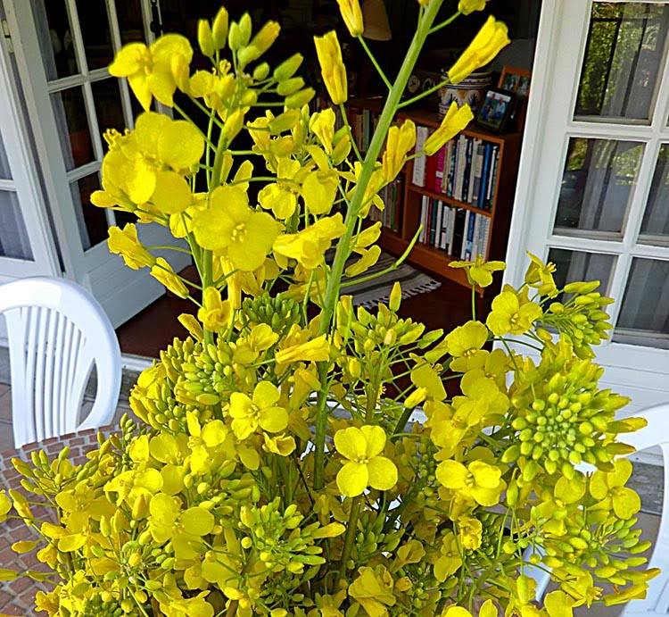 Living the life in Saint Aignan  Yellow flowers    name that plant You might recognize these yellow flowers  or you might not  You don t  usually see them in cut form  in a vase