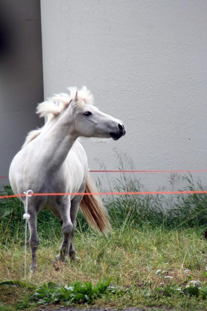 Hòlar-Cavallo