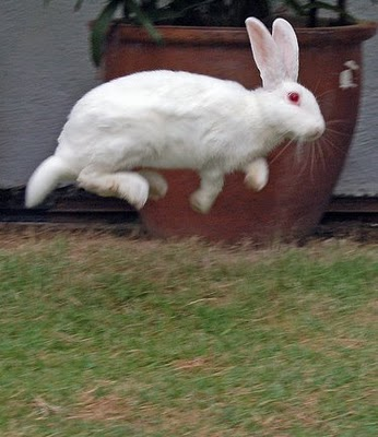 Hunny Bunny Sugarplum August 2010